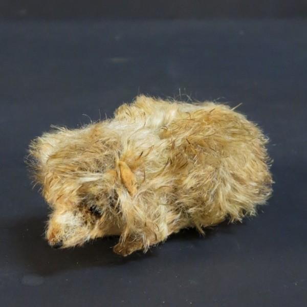 Steiff? Hedgehog. 1955 - 1960.